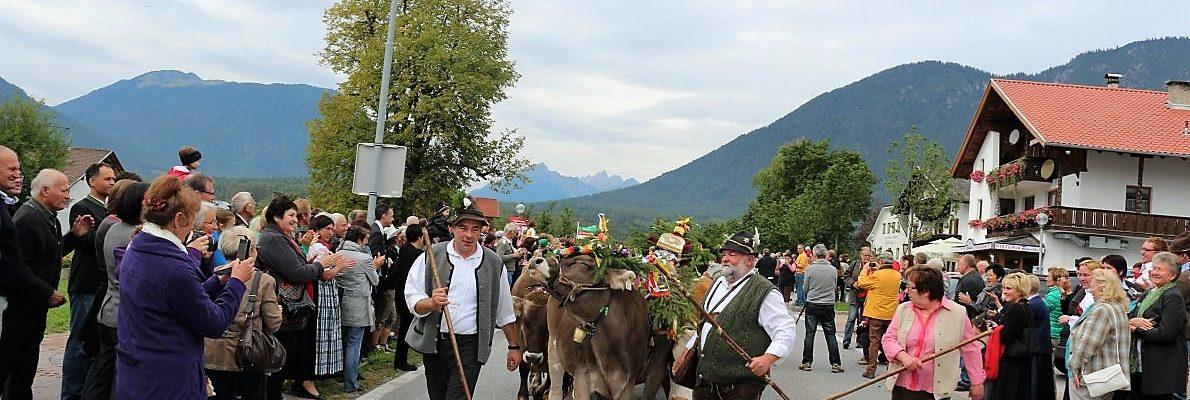 Gemeinsamer Almabtrieb von den drei Mieminger Almen. Über zweitausend Menschen applaudierten bei der Ankunft der Hirten mit ihrem Vieh. Foto: Knut Kuckel