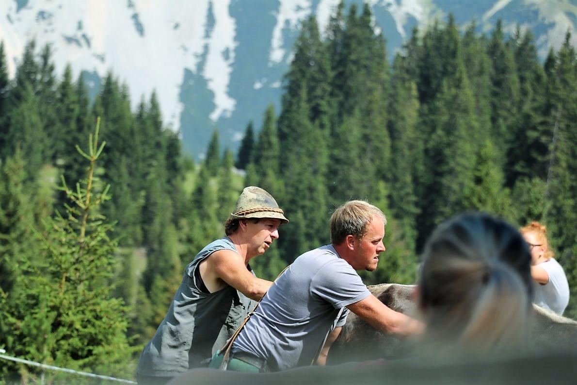Christian Maurer züchtet Pinzgauer Rinder, die er im Sommer zur Seeben Alm führt
