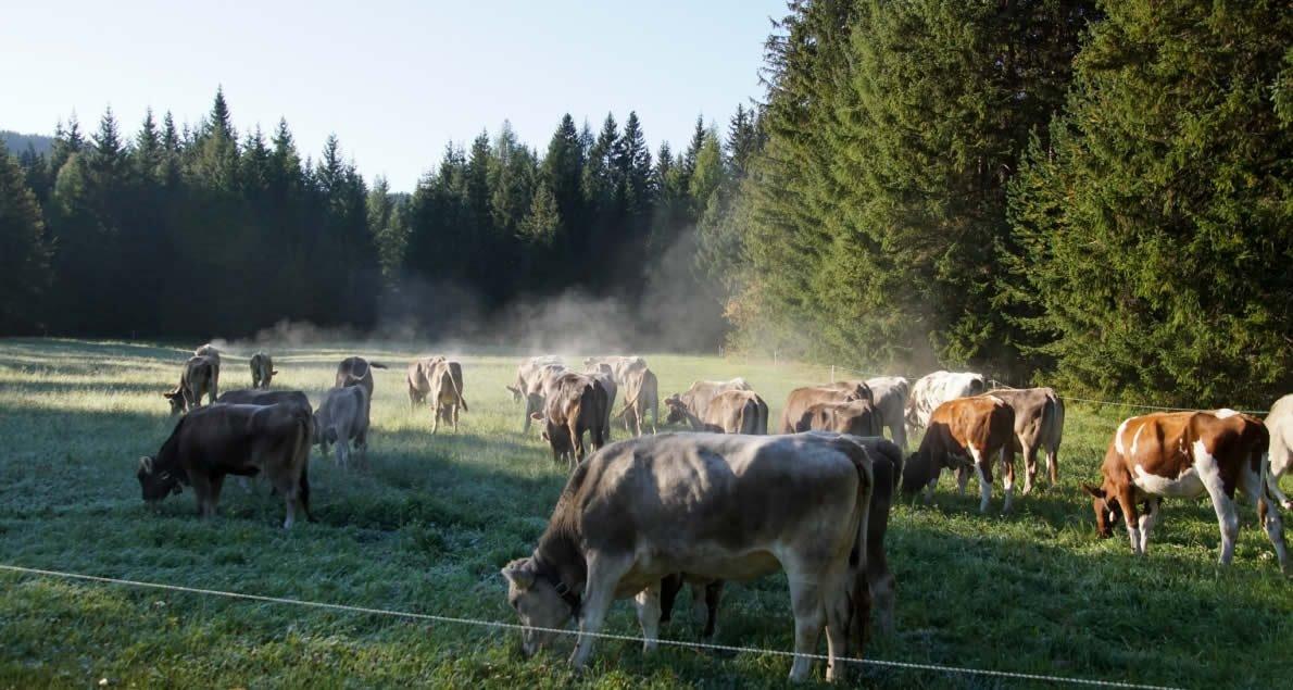 Am Samstag-Morgen gegen 7 Uhr machte sich das Hirtenteam im Gaistal auf den langen Weg zum Mieminger Plateau. Foto: Andreas Fischer